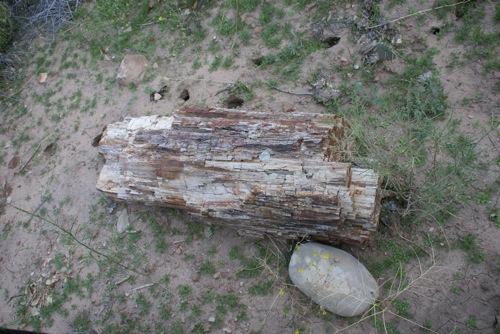 small_20101102_DSC05408.jpg